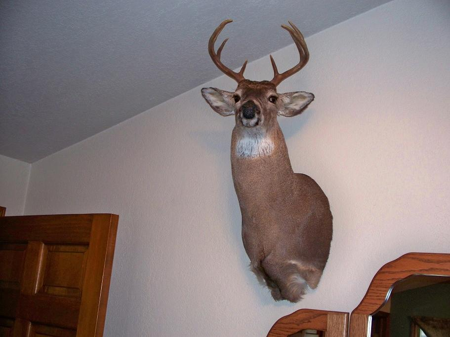 Got my Ohio buck back-001-3-.jpg