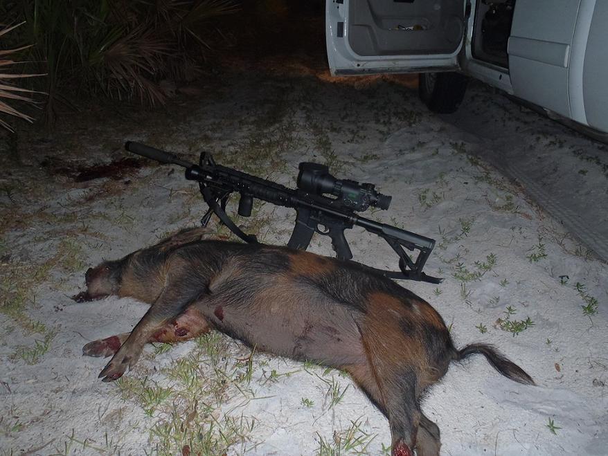Finally, found the hogs-005.jpg