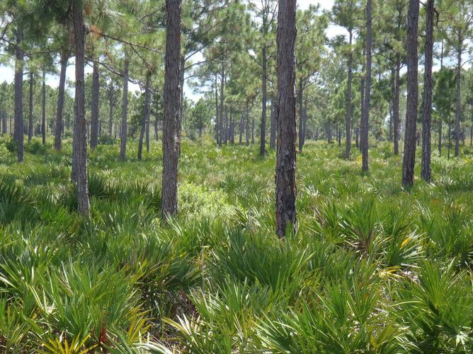 Florida bowhunt-008.jpg