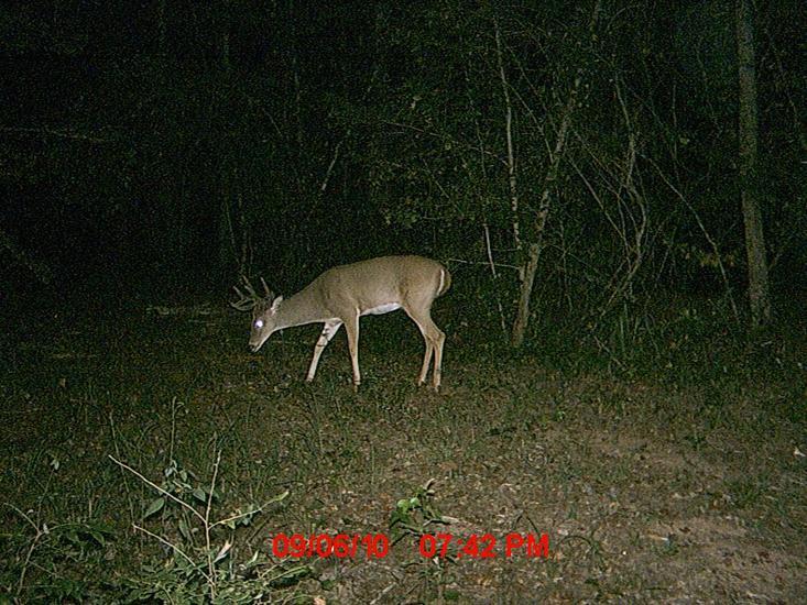 New trail cam pics.-011.jpg