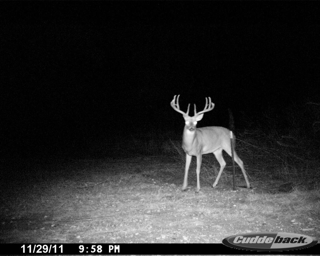 Teen Hunter's Deer Season 2011/2012-08bigbuck2.jpg