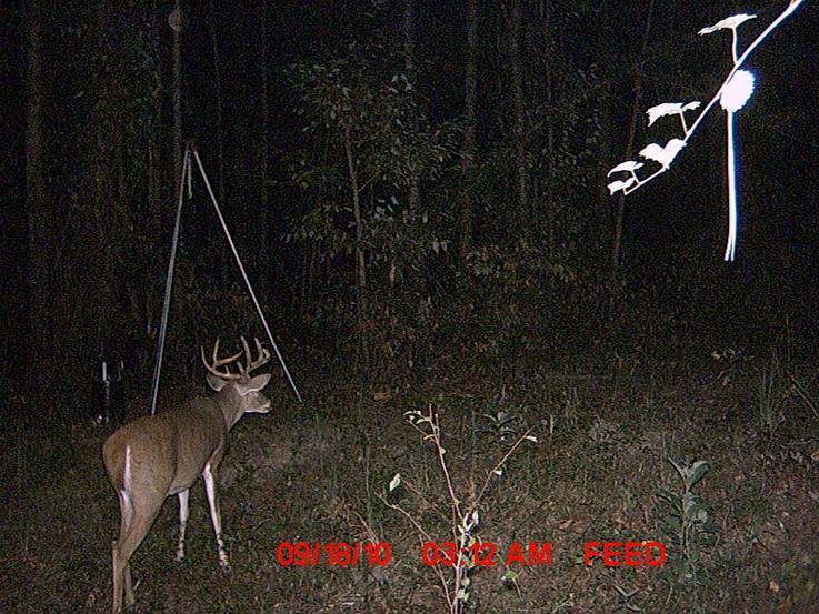 New trail cam pics.-187.jpg