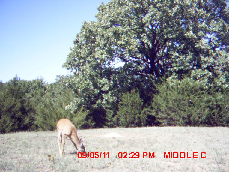 Finally found my trail cams...-2.jpg