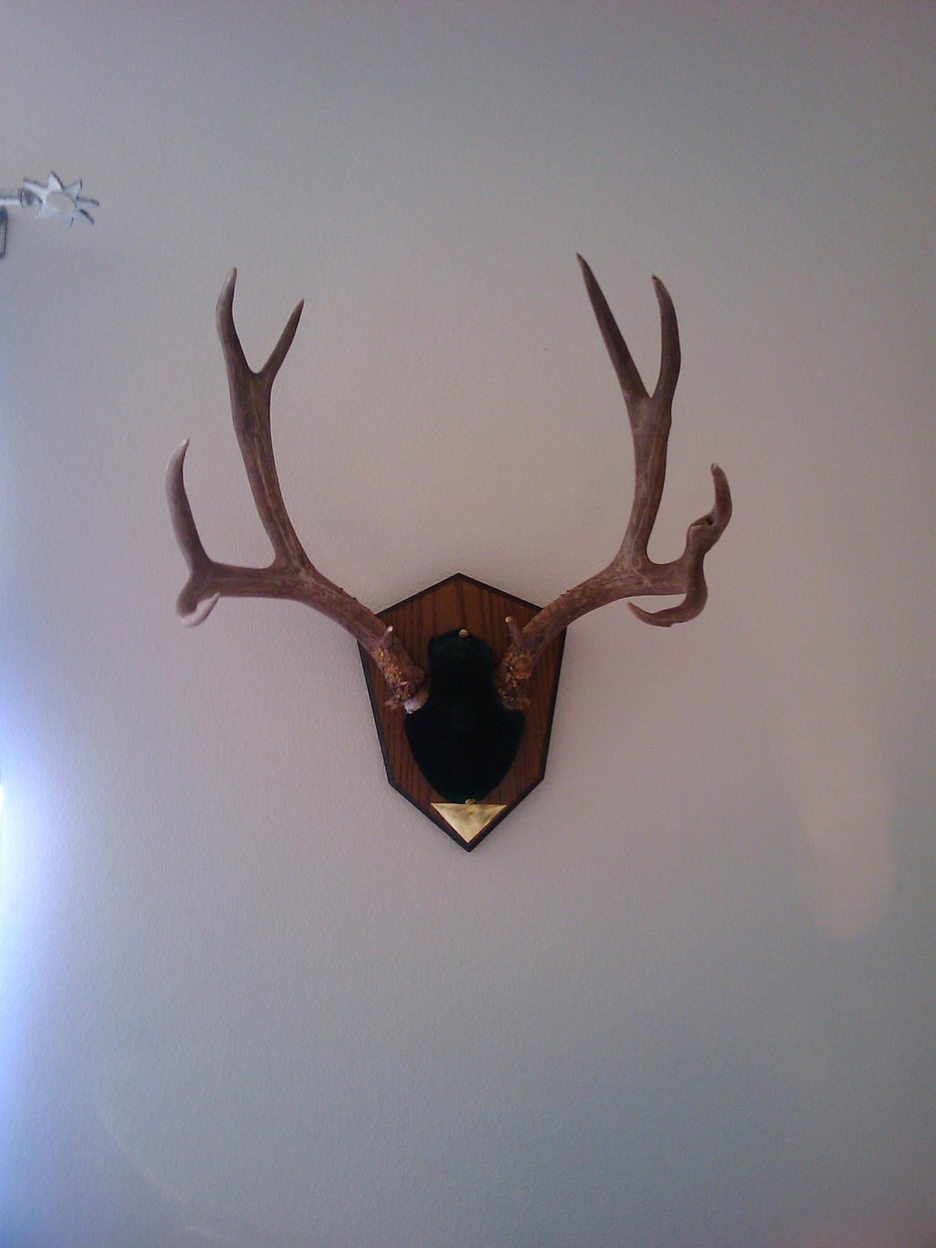 first deer!!-2009-09-26-14.51.15.jpg