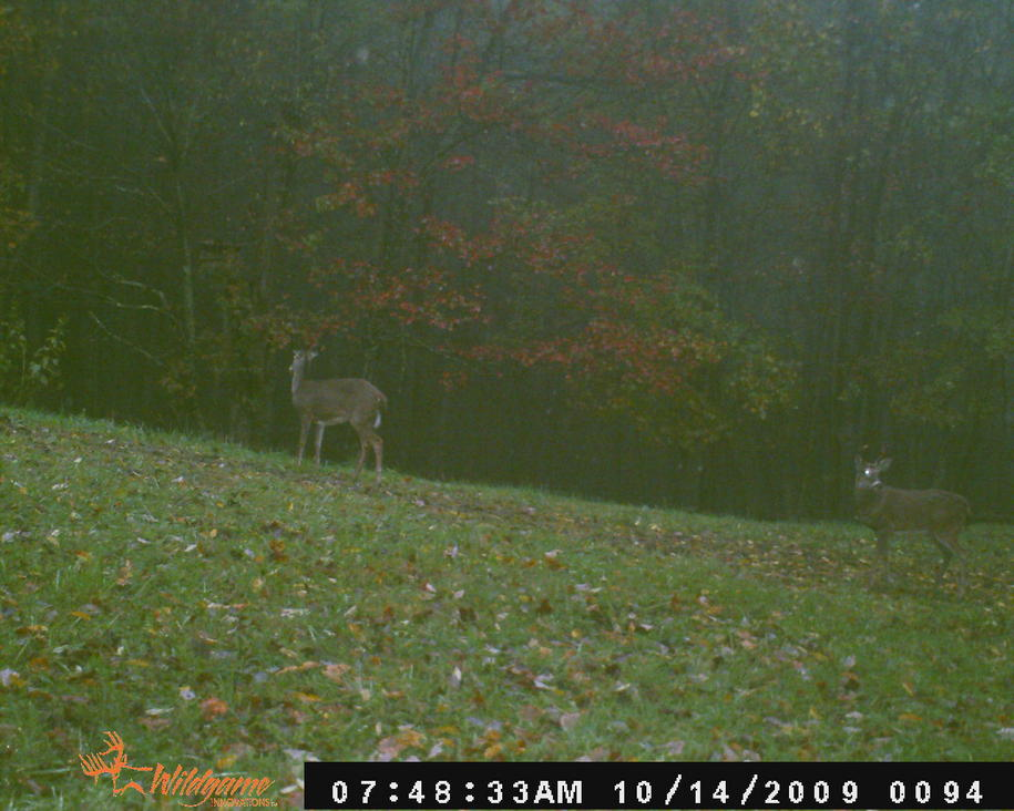 my '09 archery buck-2009-nc-trail-cam-pics-080.jpg