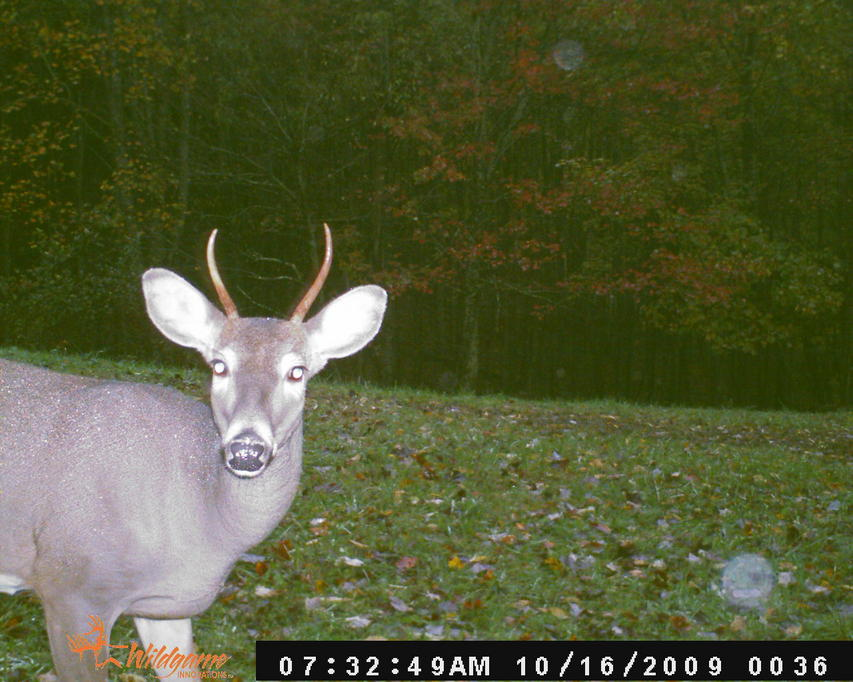 Game camera and spooking deer-2009-nc-trail-cam-pics-120.jpg