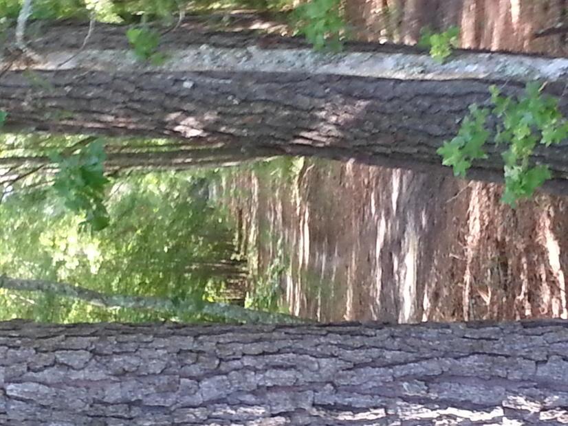 1762 Acres Jasper county South Carolina Hunting Club-20140707_095643.jpg