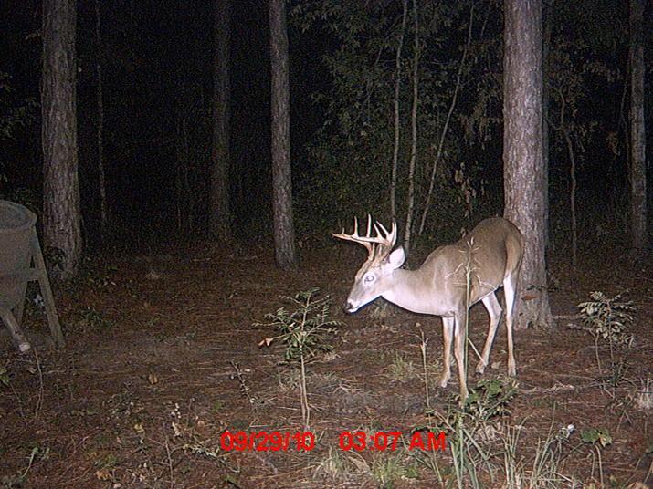 New buck-223.jpg