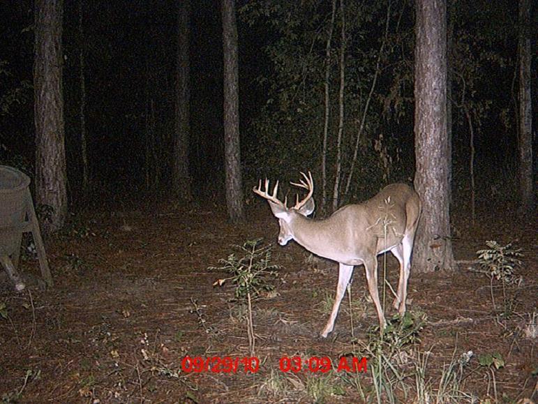New buck-224.jpg