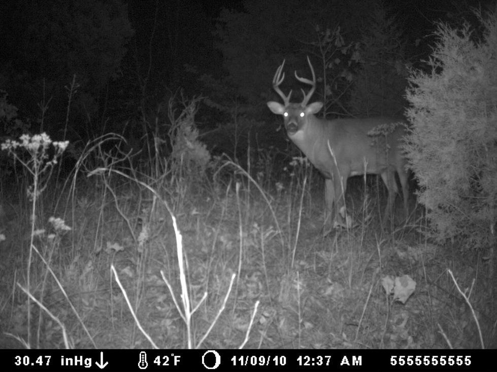 Great KY buck-23.jpg