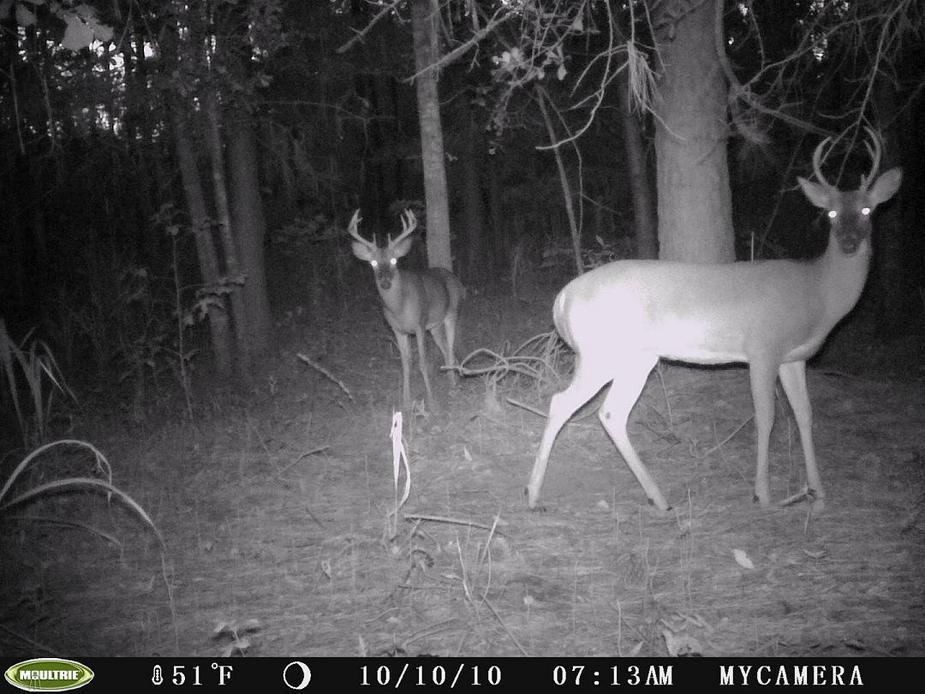 New buck-251.jpg