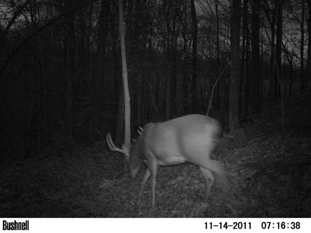 Southern Illinois 370 Acre Lease-3.5-y.o.-10pt..jpg