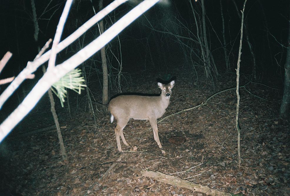 trail cam pics-460899-r1-01-1.jpg