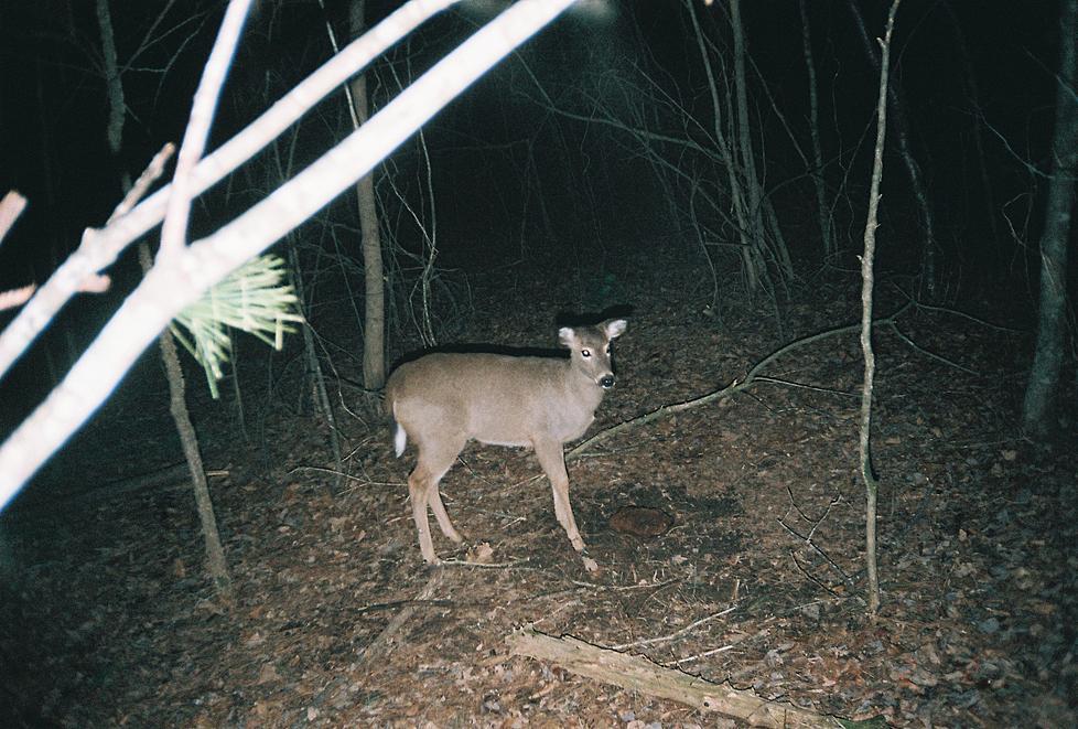 trail cam pics-460899-r1-02-2.jpg
