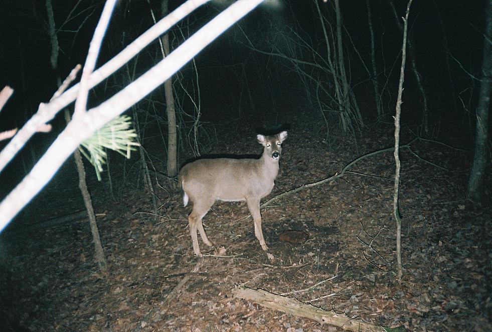 trail cam pics-460899-r1-03-3.jpg