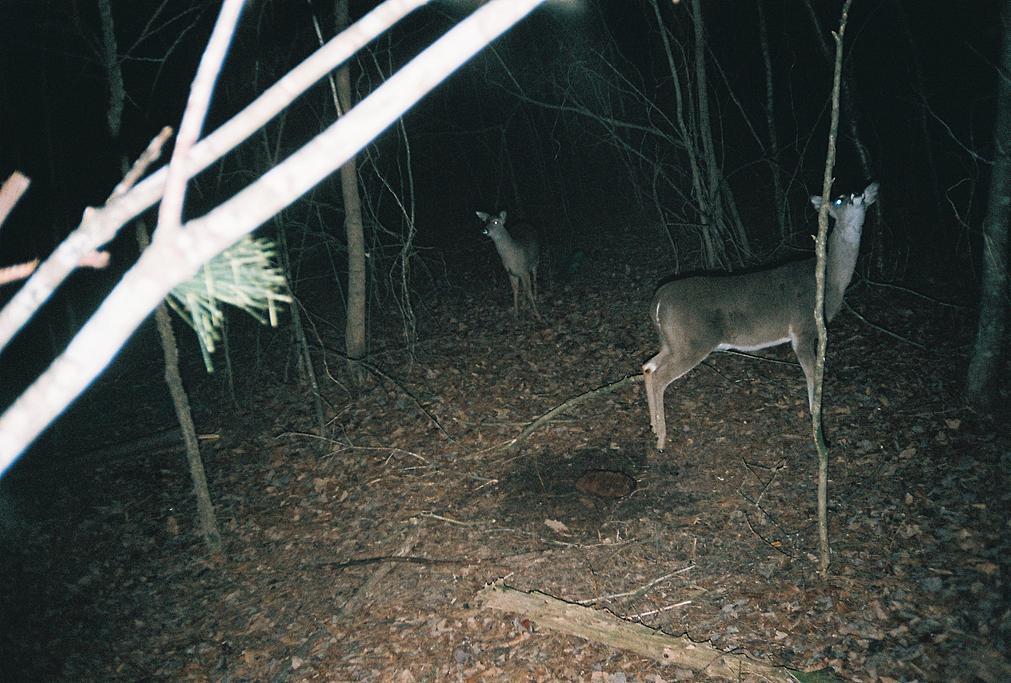 trail cam pics-460899-r1-07-7.jpg