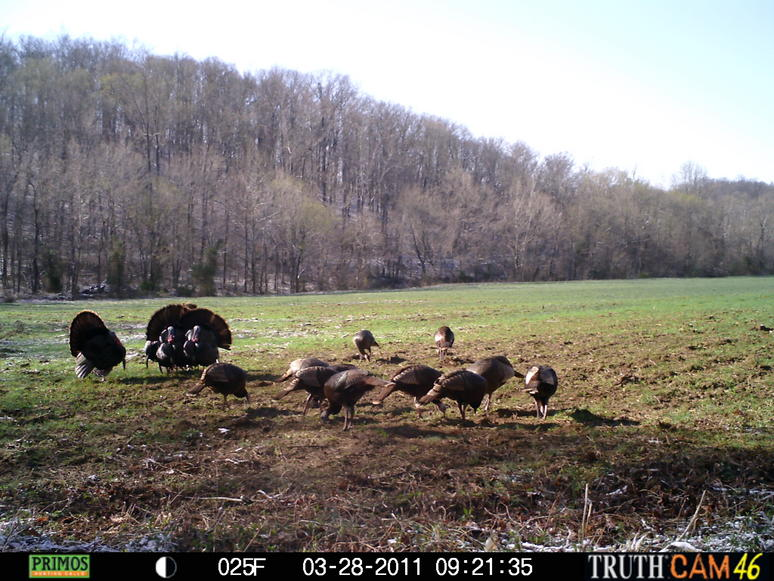 Mixture Turkeys and deer (turkey season)-496.jpg