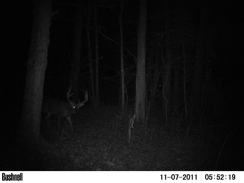 Southern Illinois 370 Acre Lease-5.5-y.o.-booner_10pt_2.jpg