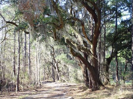 1762 Acres Jasper county South Carolina Hunting Club-560327-0909101418282435-p.jpg