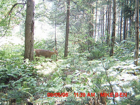 Trail cam Pics-905082.jpg