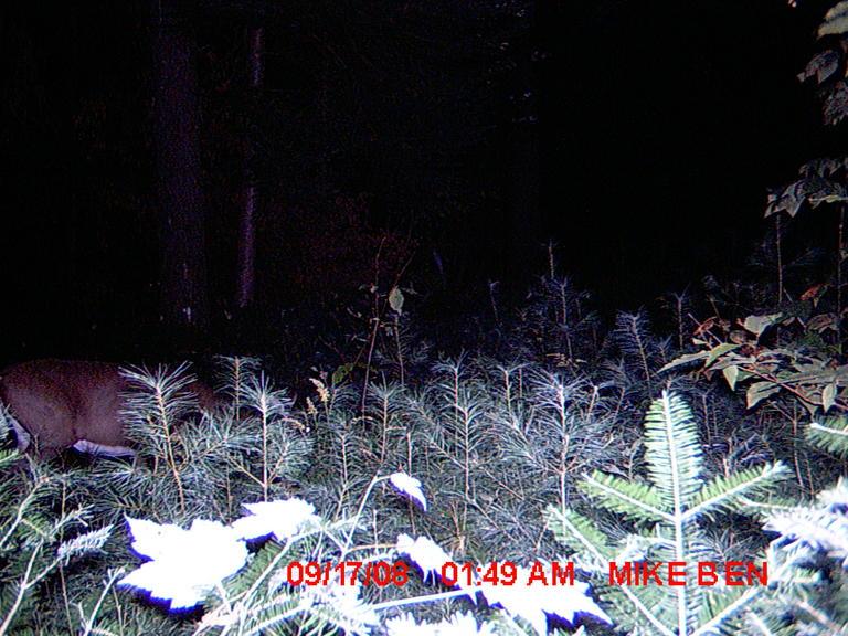 Trail cam Pics-91708l1.jpg