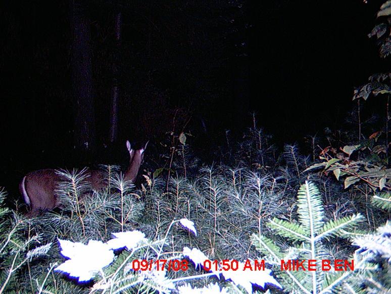 Trail cam Pics-91708l2.jpg