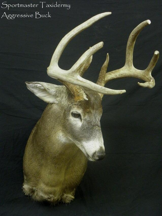 Professional Deer Taxidermy-aggressive-buck.jpg