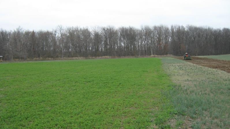 Alfalfa-alfalfa-2.jpg