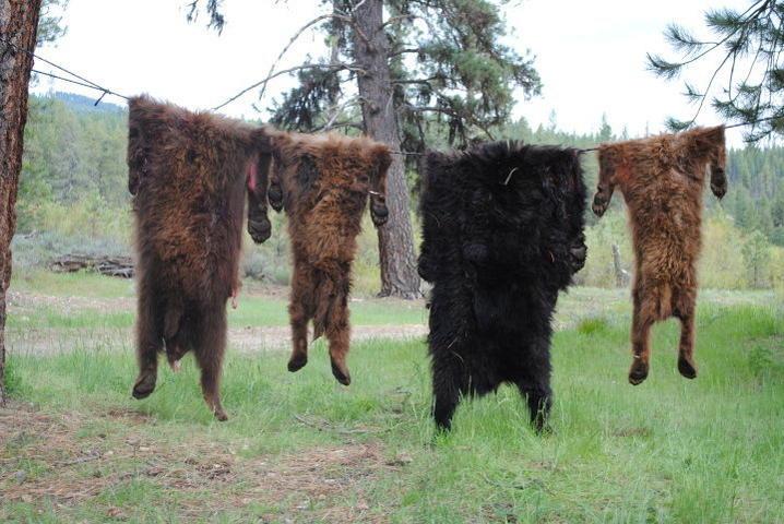 Idaho Bear Hunts for May 2011-bear3.jpg