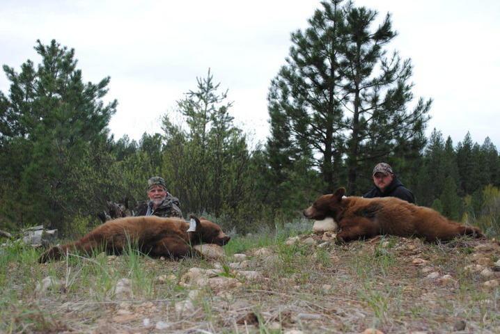 Idaho Bear Hunts for May 2011-bears.jpg