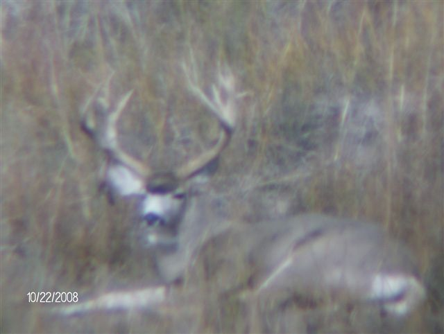 First Time Deer Hunter-big-buck-002.jpg