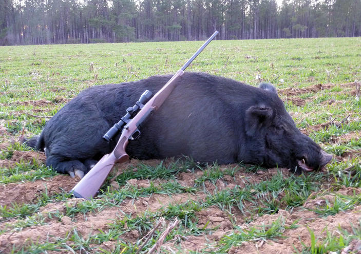 Great Georgia Hog Hunt-boar19.jpg