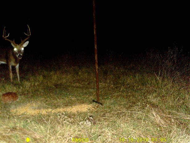 Know how to score antlers? tell me the better buck-buck-1.jpg