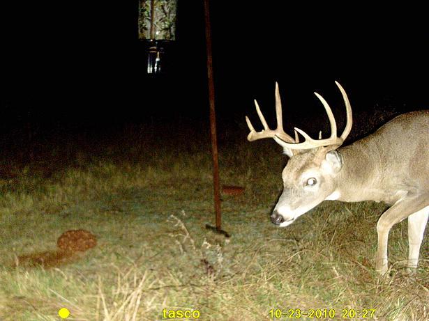 New Buck Pics-buck-2.jpg
