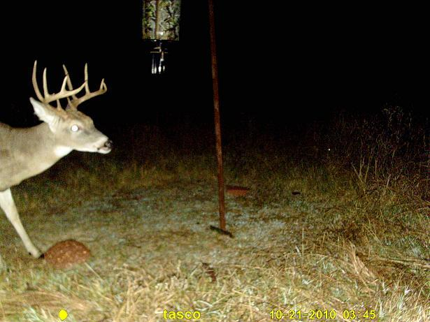 Know how to score antlers? tell me the better buck-buck-2-pic-2-.jpg