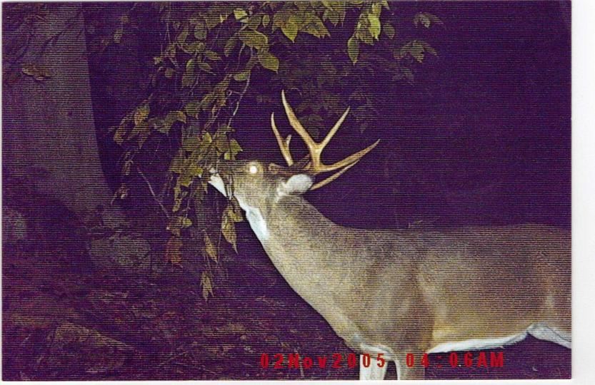 Bowhunting here in Wonderful WV Using Buck Wild Synthetics.-buck-wild-pic-16.jpg