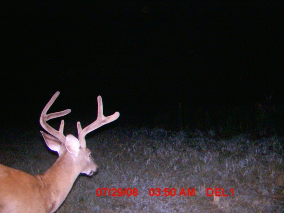 few more pics-buck1.jpg
