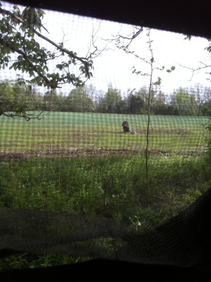 turkey hunting-camturkey2.jpg