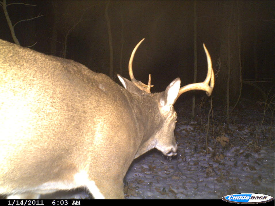 Recommended trail cameras on sale!!!-cdy_0010.jpg