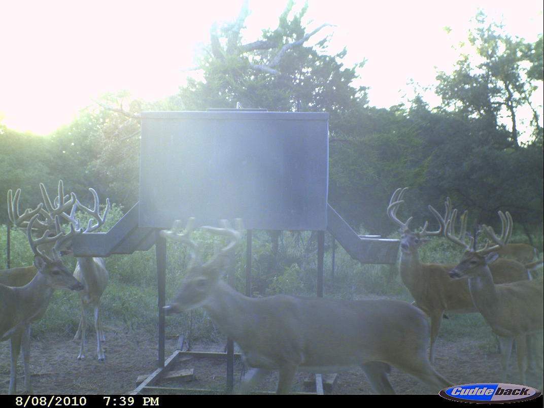 Hunt for Texas Bucks-cdy_0013.jpg
