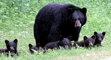 The Yogi 5 Bear pic-cid_653f4af4adbf48458a6e763cdfd42e66-ownerbf427193d.jpg