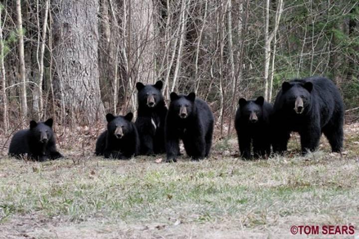 The Yogi 5 Bear pic-cid_b5e365ebb07f40d6937c491e5f59bdbe-ownerbf427193d.jpg