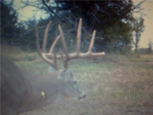 Kansas Trophy Outfitters-codys-ebay3.jpg