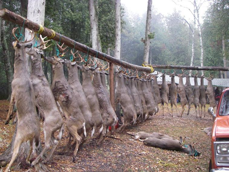 Deer Hunting Investigation 2009-deer-investigation.jpg