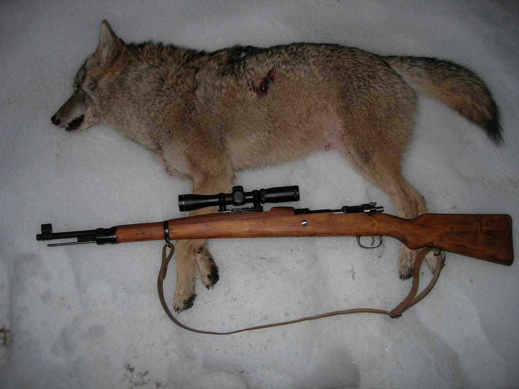 coyotes-dscn1821.jpg