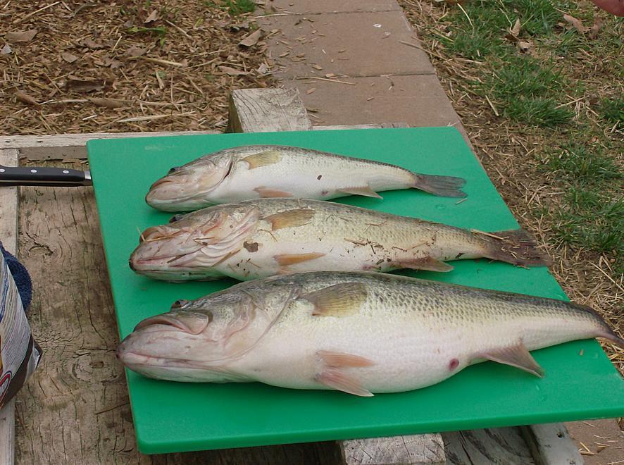 Fishing pics-hpim0418.jpg