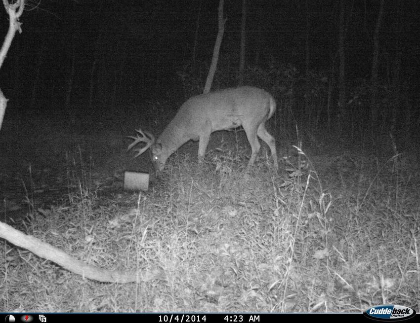 Finally got some bucks on the trail cam-i_00094b.jpg