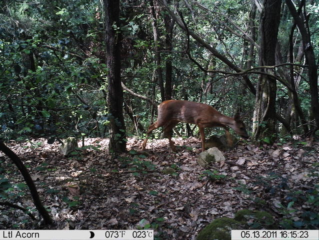 some lease trail cam pics.. (sorry their small)-imag0610.jpg