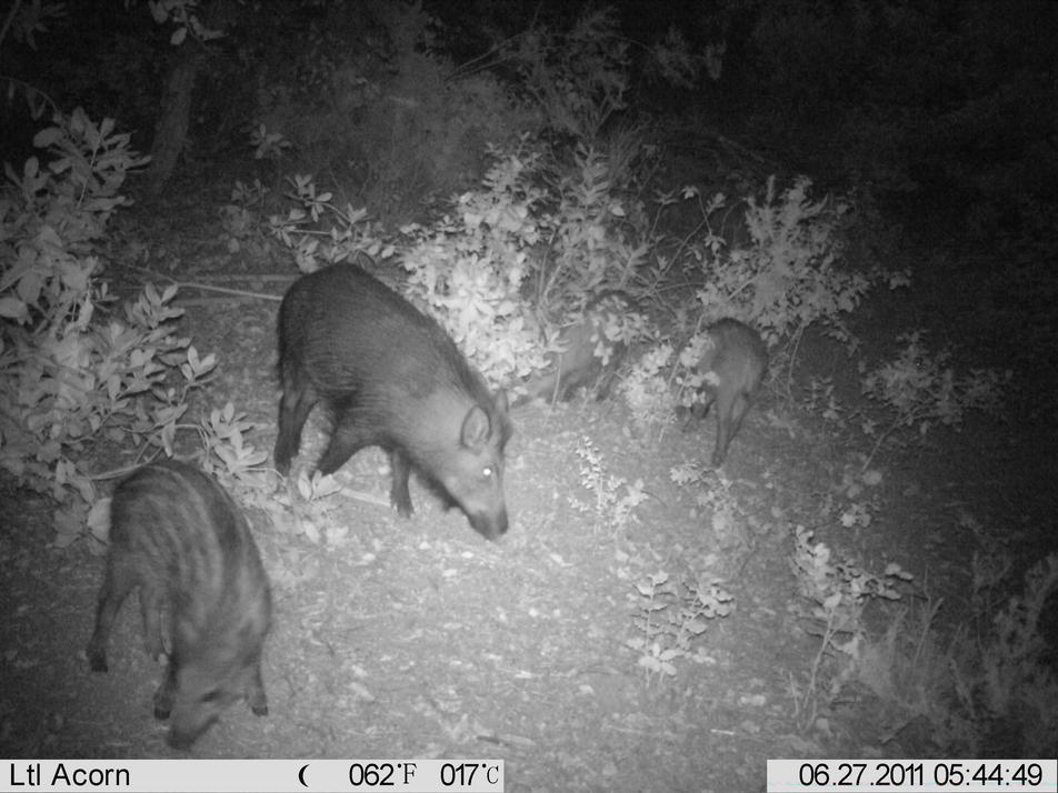 some lease trail cam pics.. (sorry their small)-imag1375.jpg