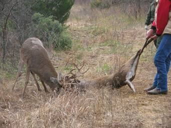 Two bucks fighting...-image006.jpg